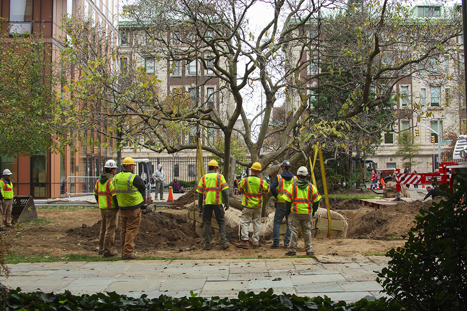 Barnard To Replace Dying Magnolia With New Tree Columbia Daily